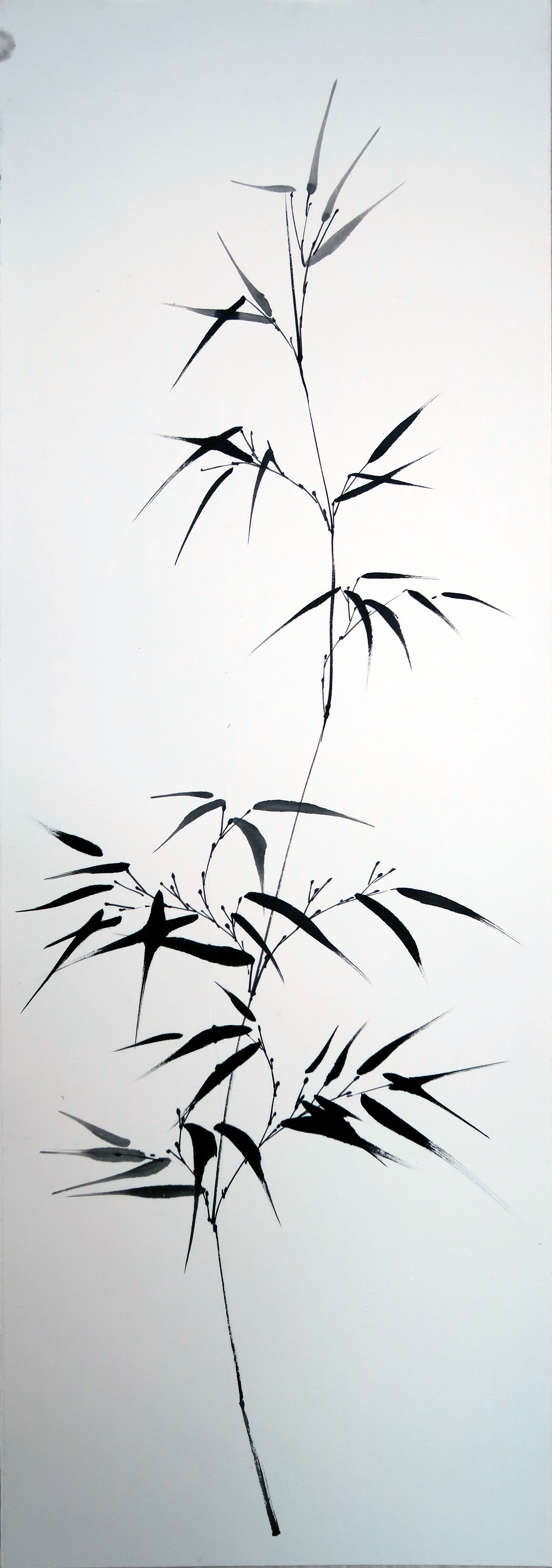 Bambou gracile